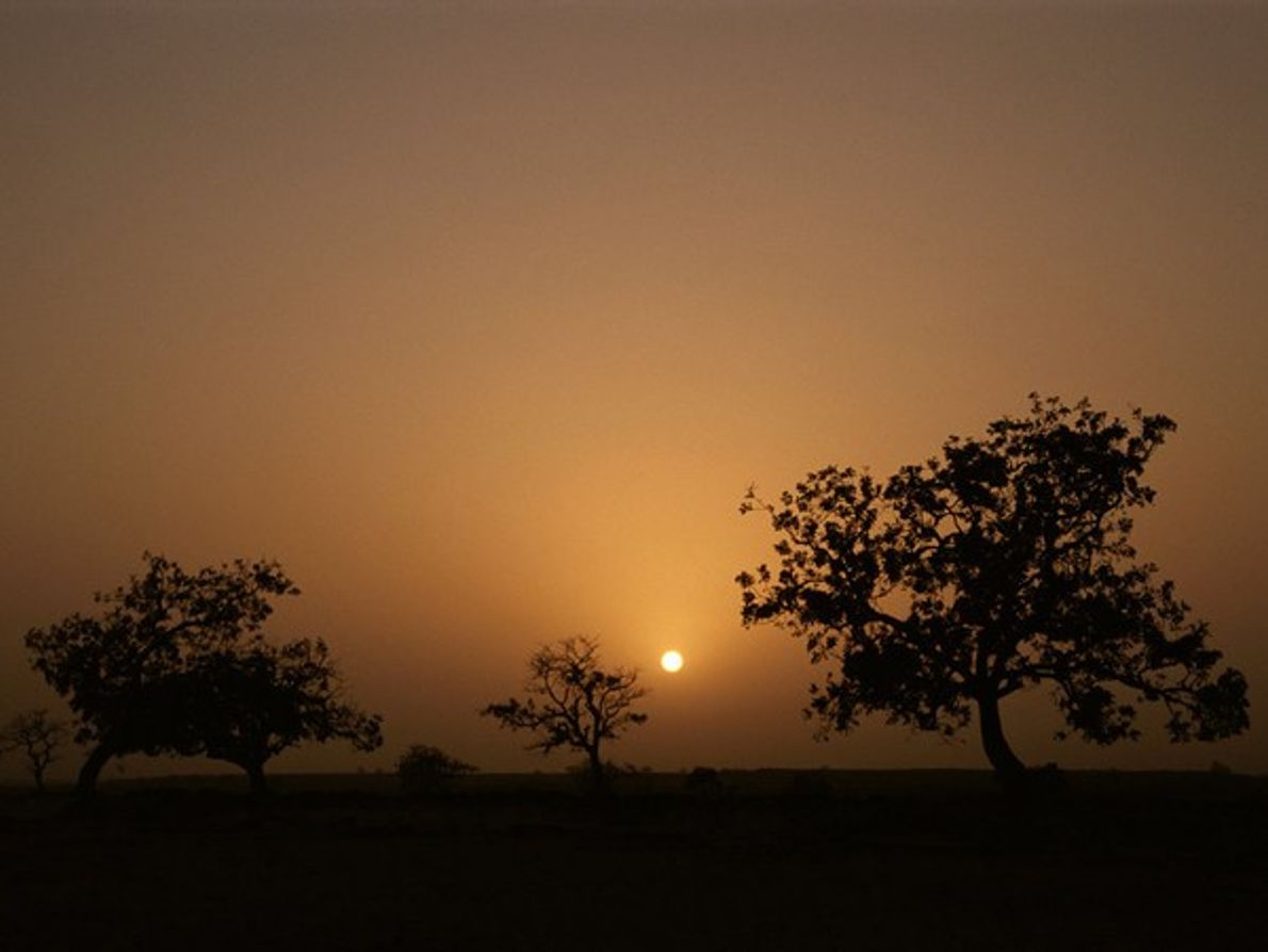 Árboles boabab, Mali