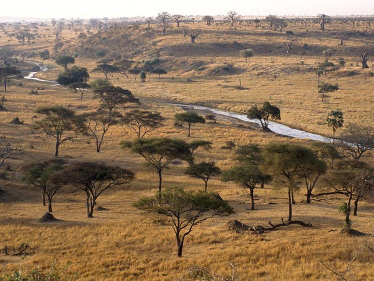 Parque Nacional de Tarangire, Tanzania