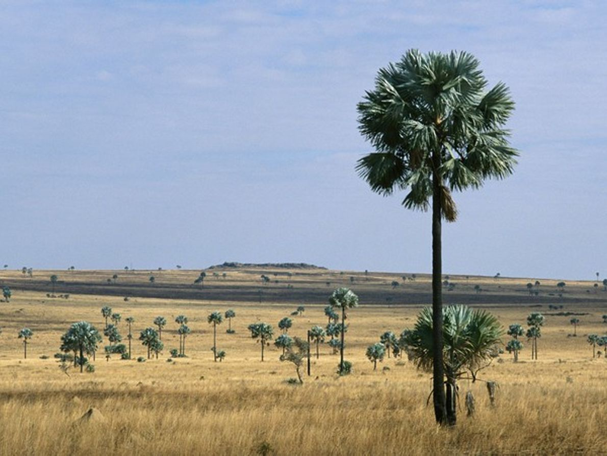 Sabana de Madagascar