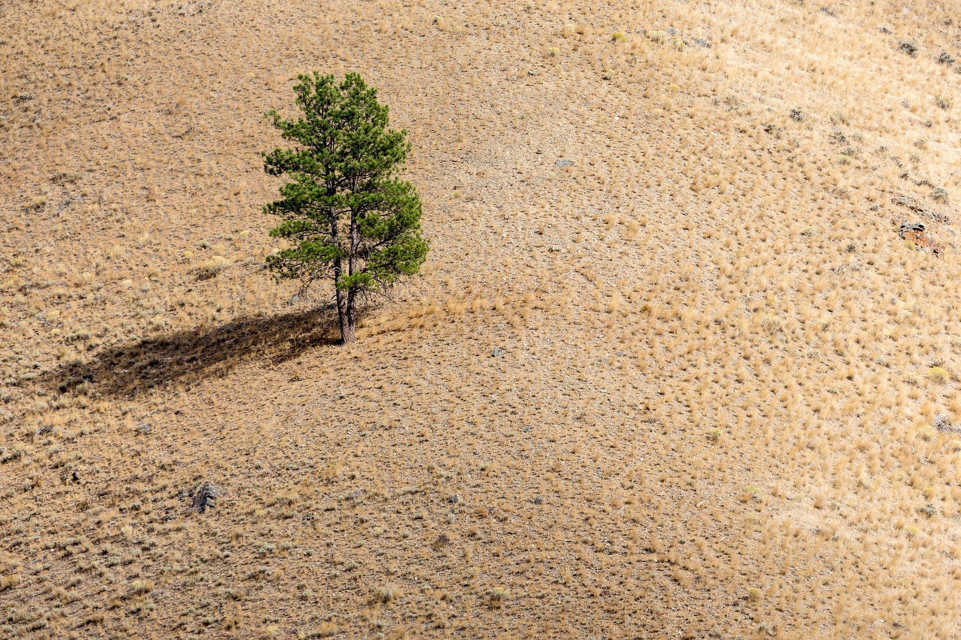 Árbol solitario en una colina, al caer la tarde.