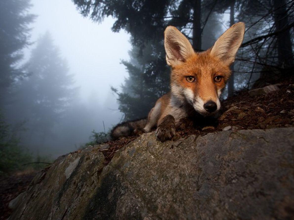 Las mejores fotos del Mundo Animal 2011