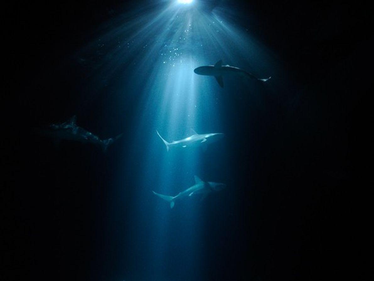 Mención Especial: El Mundo Submarino