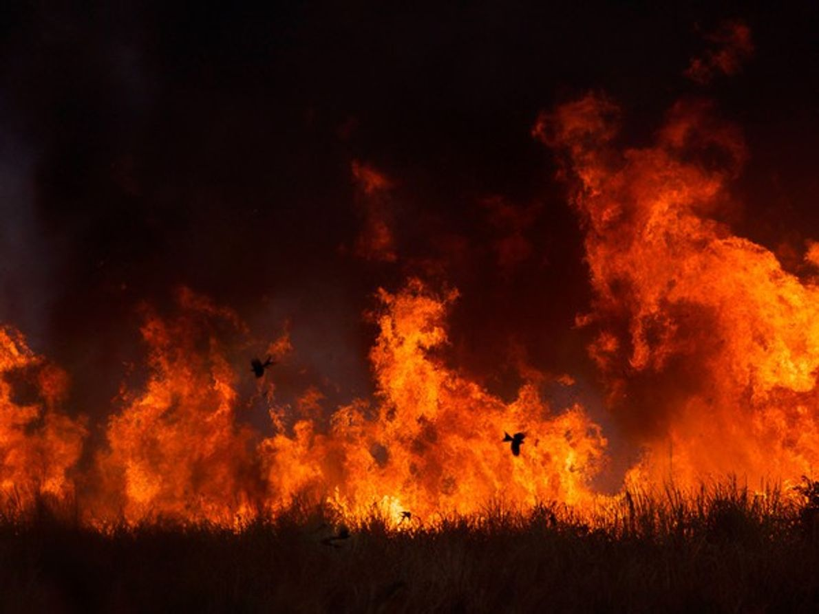 Mención Especial: El fuego volador
