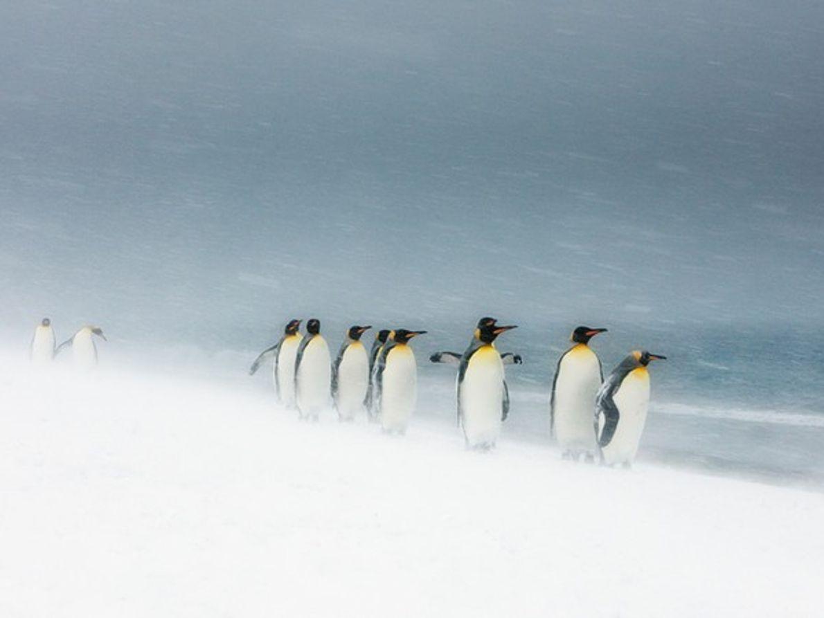 Mención especial: Los reyes de nieve