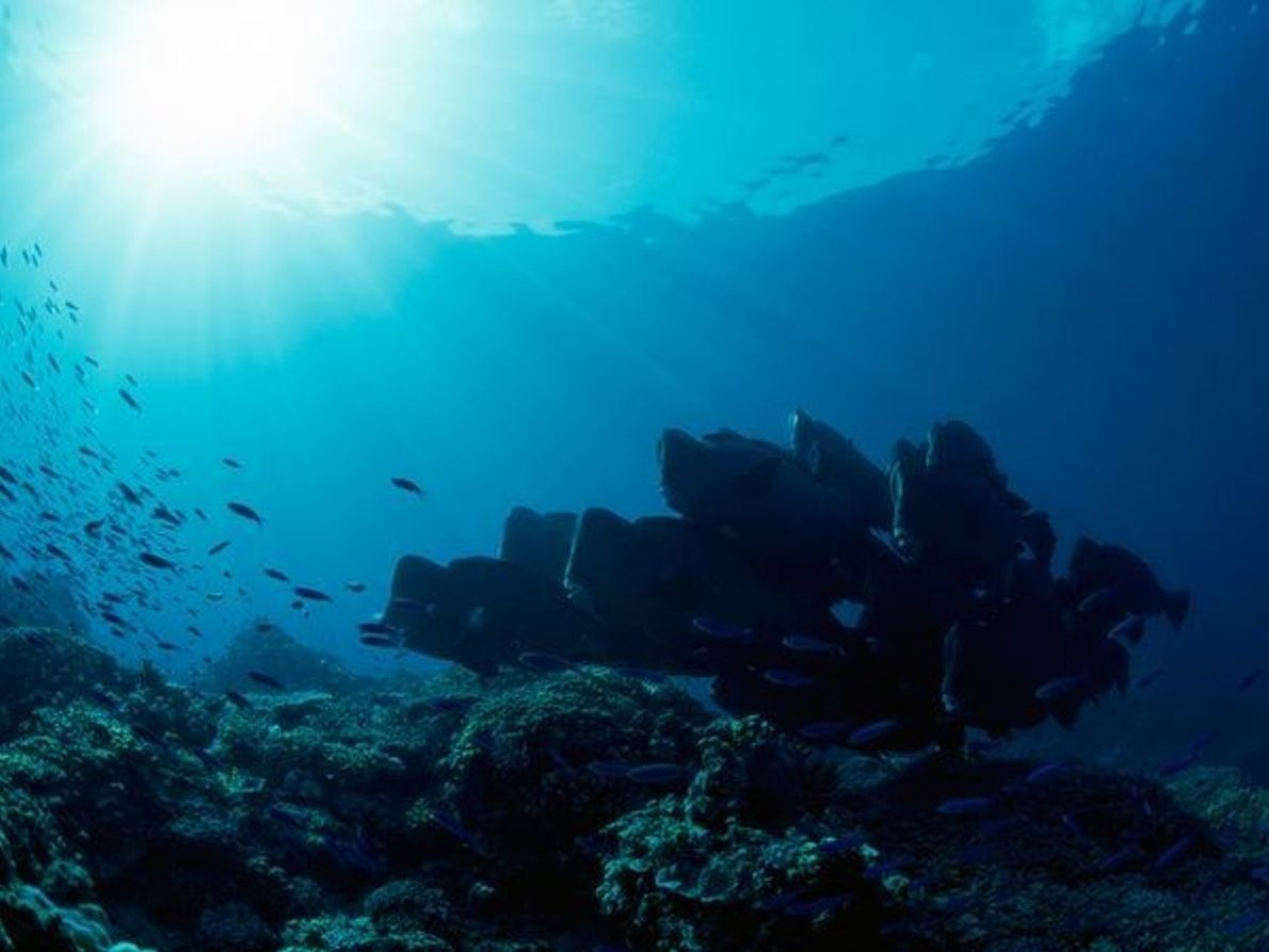 Arrecife de la Isla Raine, Australia
