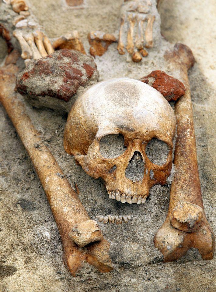 Cadáver de un presunto vampiro, Polonia