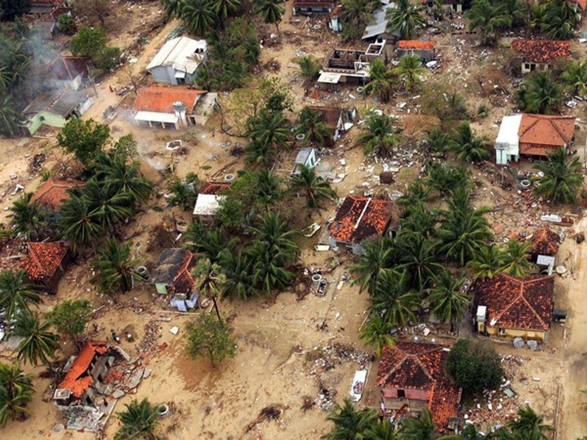 Alivio tras el tsunami