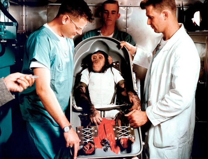 El chimpancé Ham