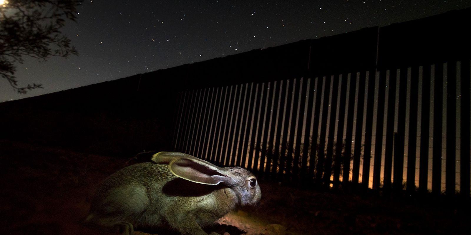Estados Unidos expande el muro fronterizo pese a la pandemia, poniendo en peligro a jaguares y ...