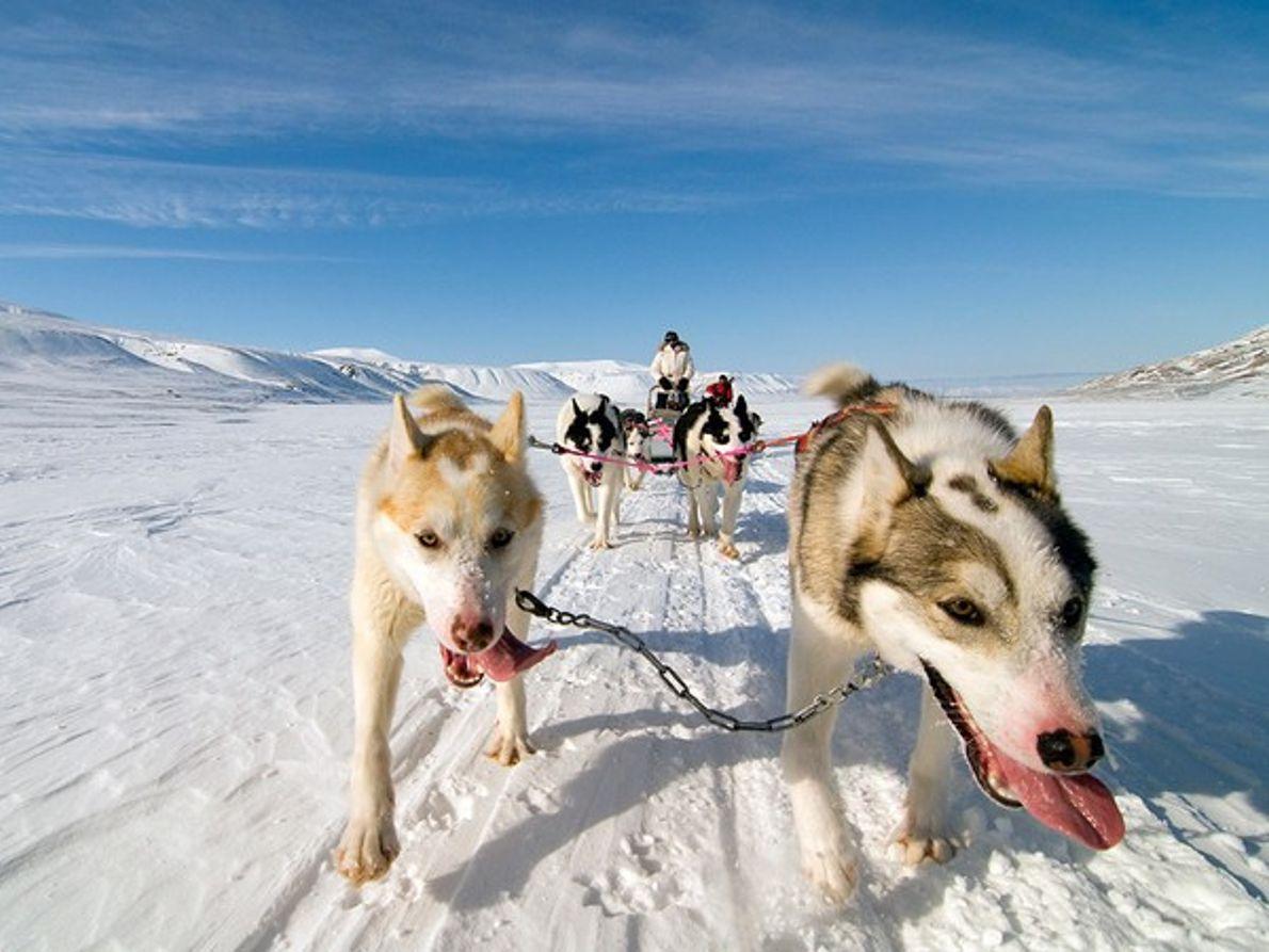 Trineos tirados por perros, Noruega