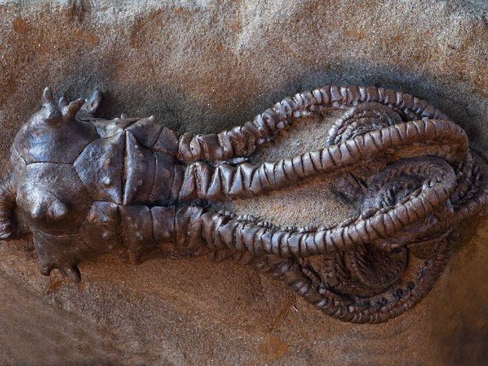 La Extinción Masiva: ¿Qué la provocó?