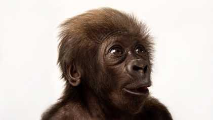 Las 10 especies más amenazadas del planeta