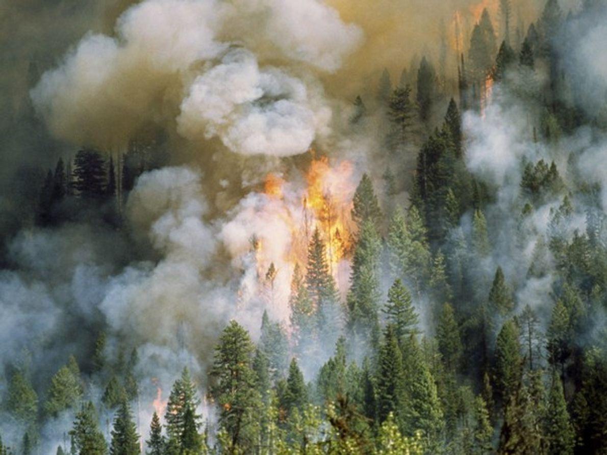 Fuego en Idaho