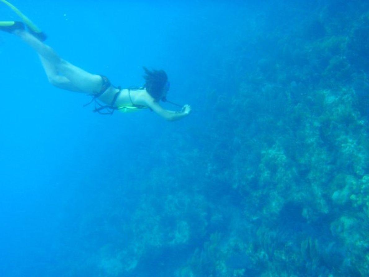 Inmersión en el BioBlitz ...