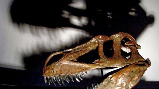 Cráneo del dinosaurio