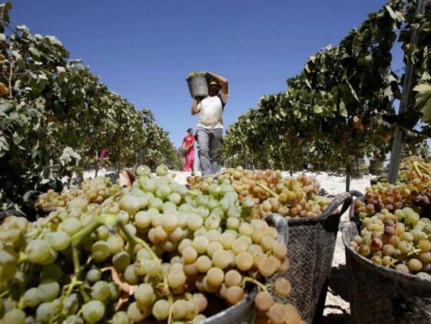¿Por qué tomamos uvas en nochevieja?