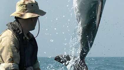 Delfines y ballenas militares: ¿qué hacen y quién los usa?