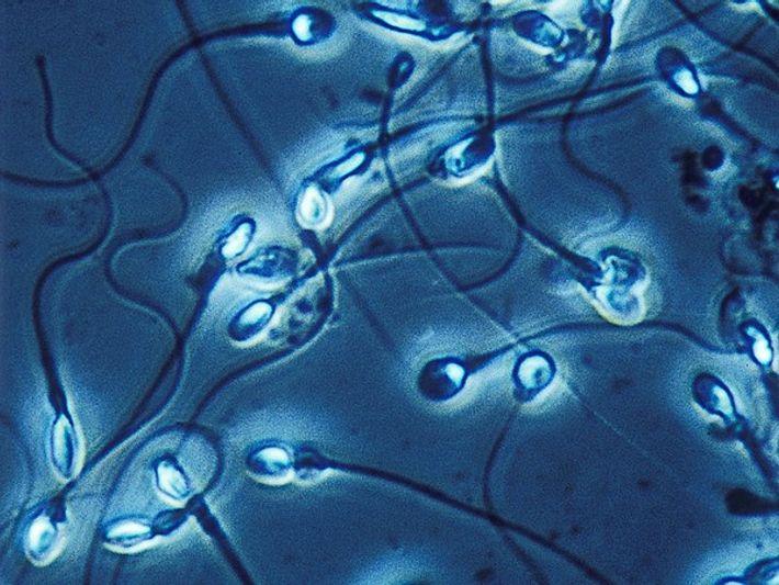 Los hombres con voz grave tienen más esperma defectuoso