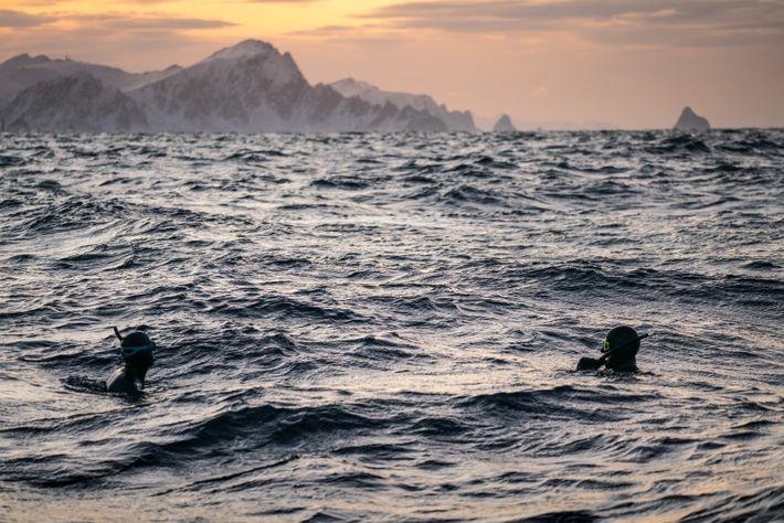 Heide y Schnöller nadan en el agua para acercarse a tres cachalotes jóvenes