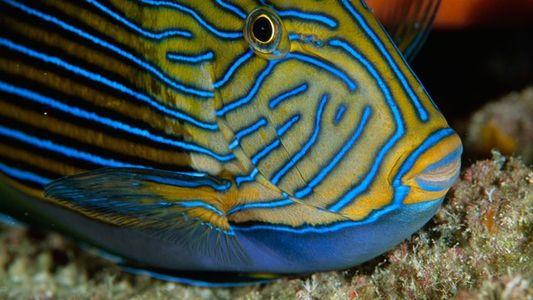 Criaturas marinas peligrosas y mortíferas