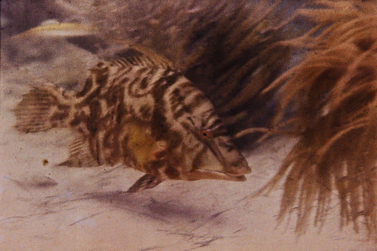 Primera fotografía subacuática en color