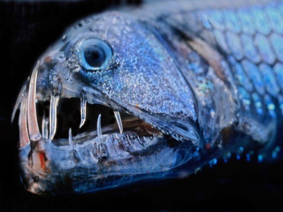 Criaturas de las profundidades marinas