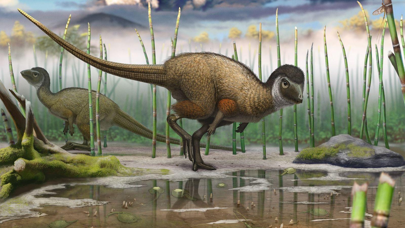 Esta ilustración de un Kulindadromeus zabaikalicus, muestra a este dinosaurio emplumado recién descubierto en su hábitat.