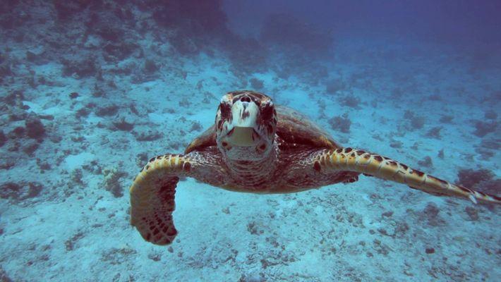 Clima 101: los océanos
