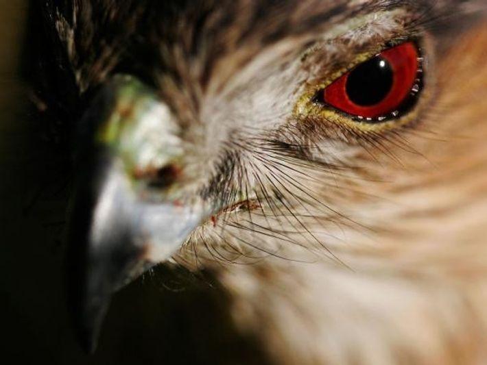 11 curiosidades acerca de los ojos