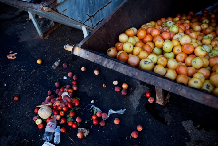Tomates desperdiciados