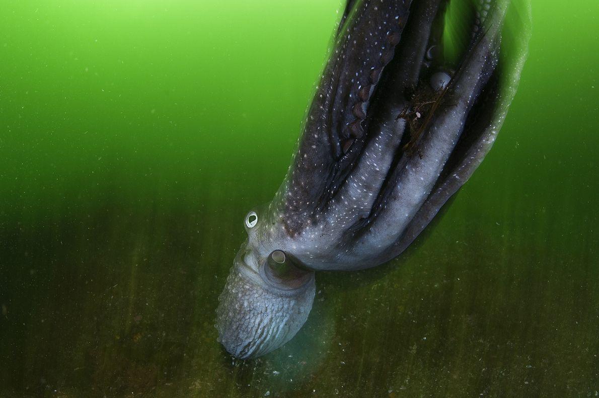 Verdes oceánicos