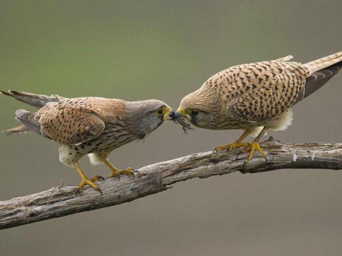 Aves alimentándose