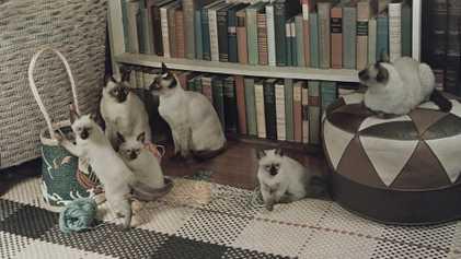 Imágenes antiguas de gatos de nuestros archivos