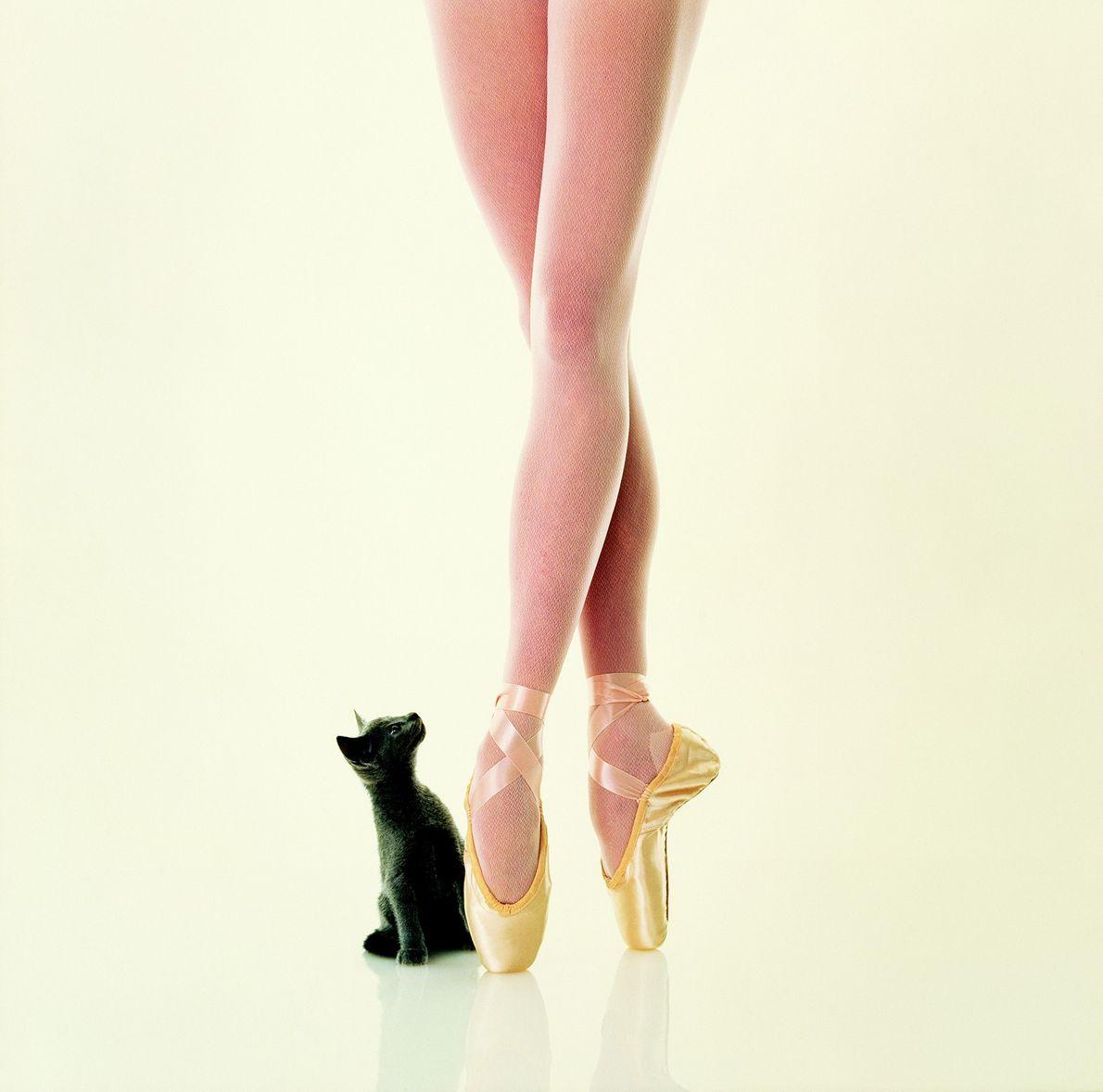 Gato y bailarina