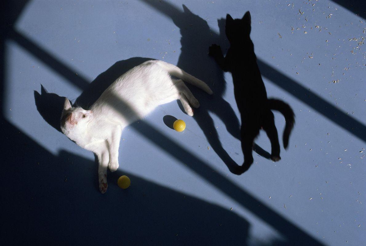 Un gato se relaja mientras otro juega