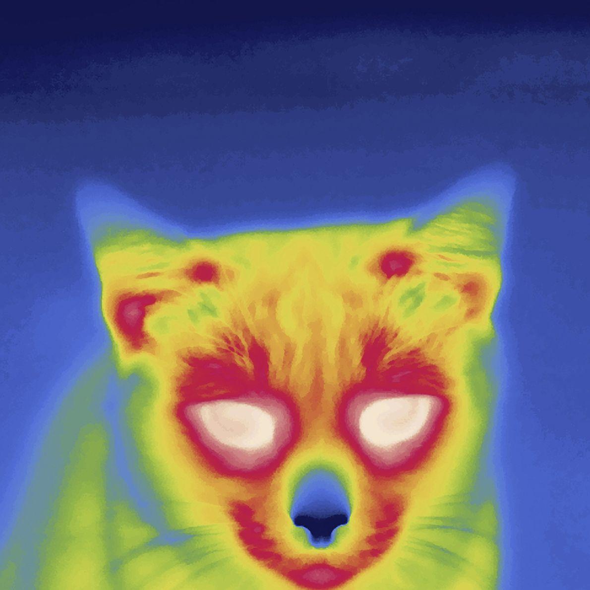 Imagen térmica