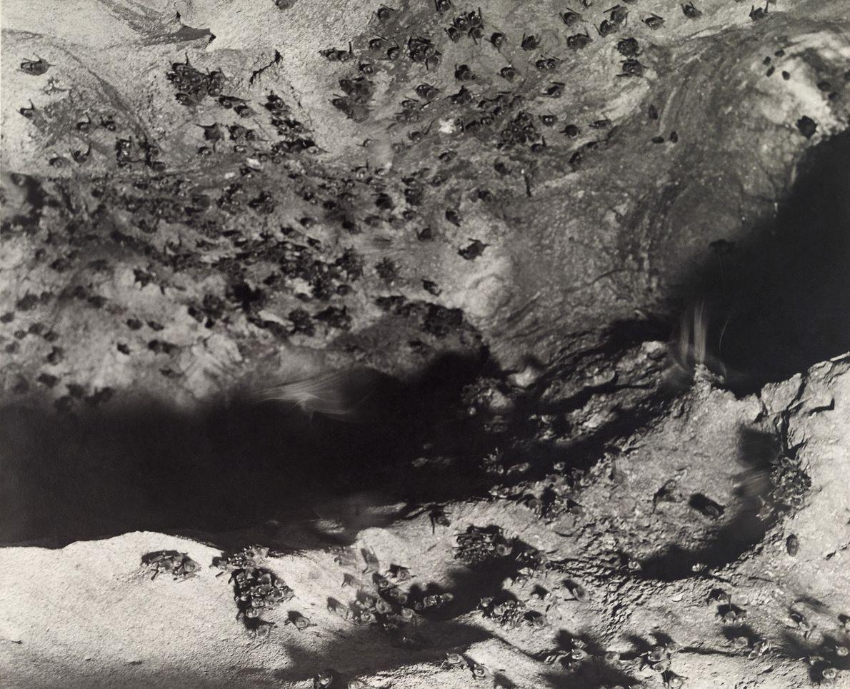 Murciélagos en una cueva