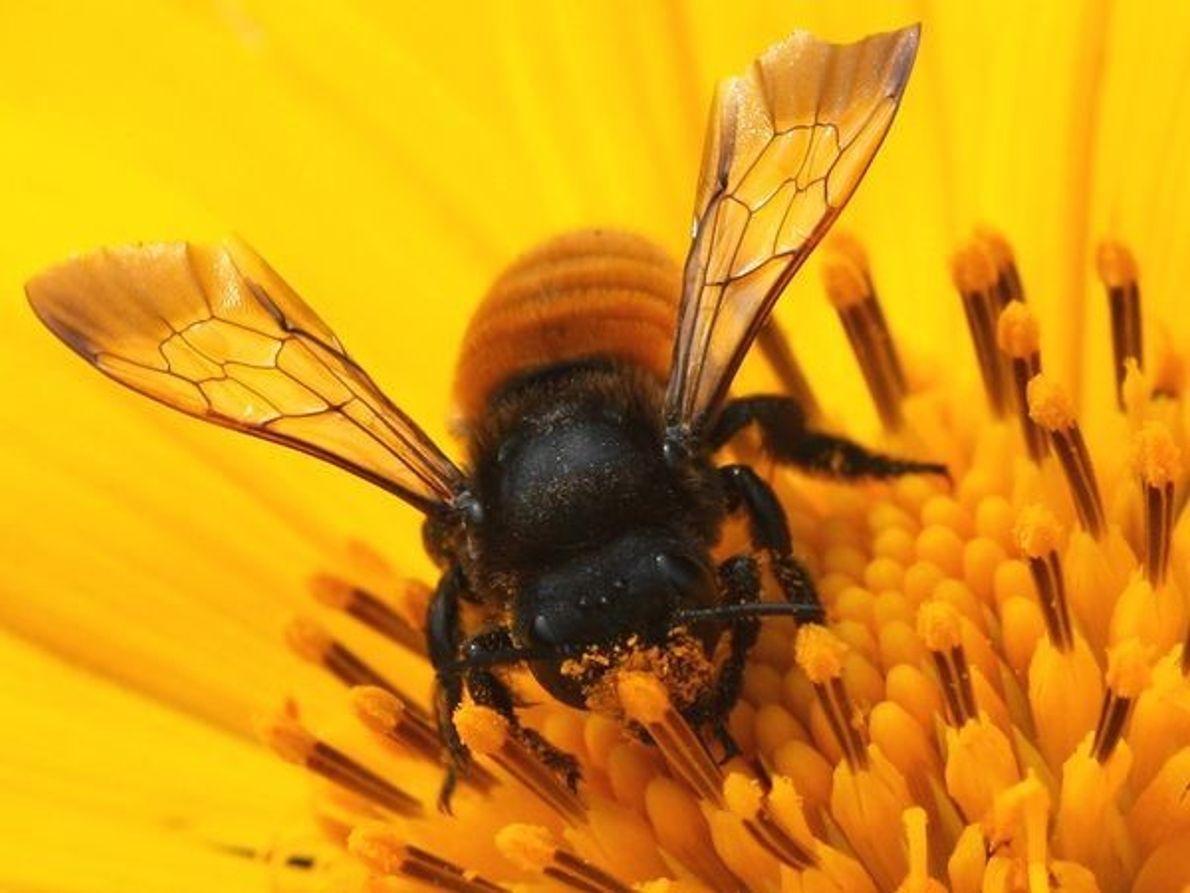 Adicto al polen