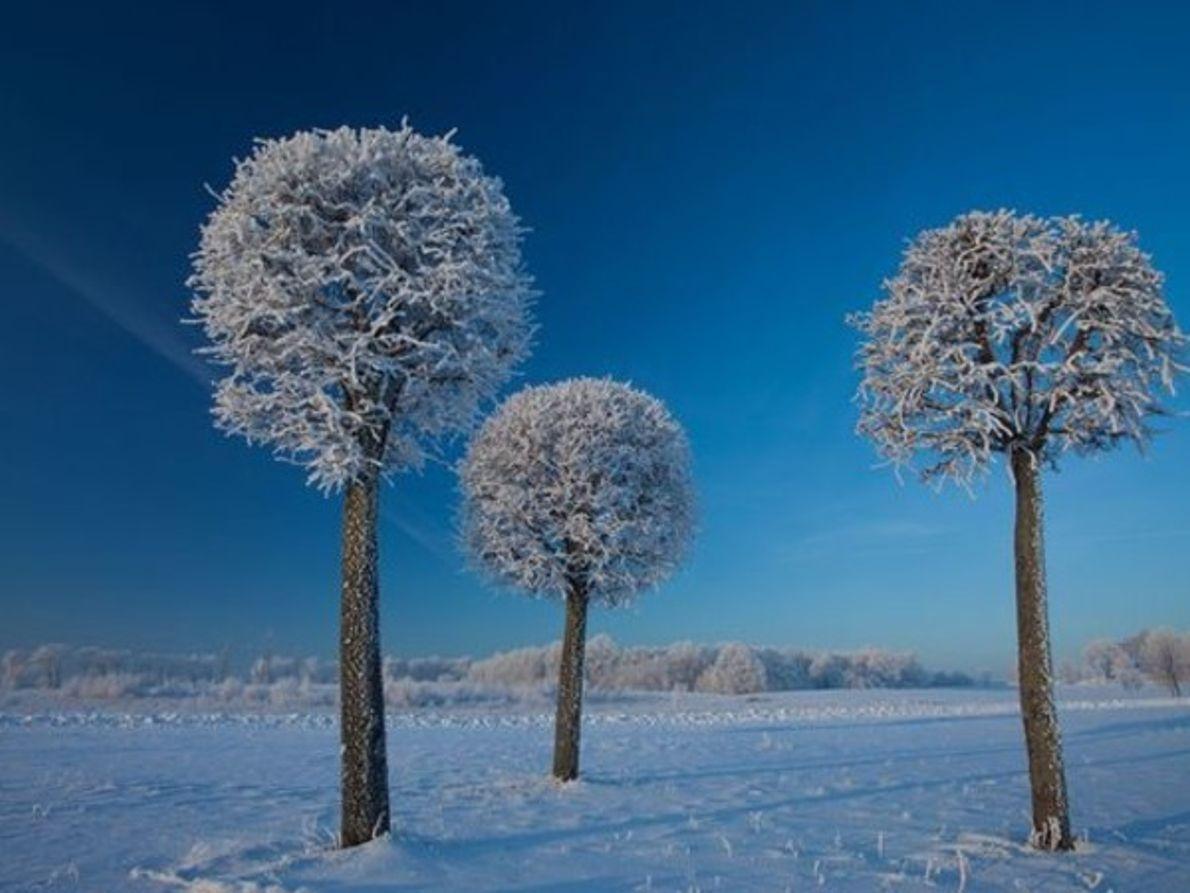Árboles, Lituania