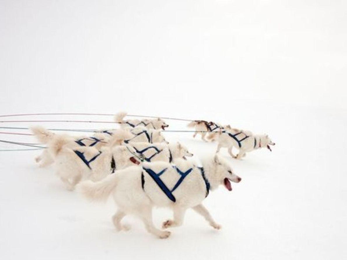 Perros de trineo, Canadá