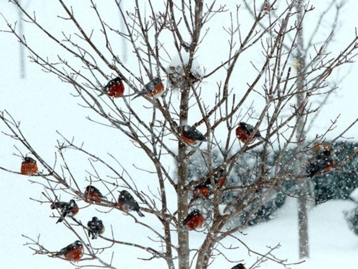 Tormenta de invierno, Maryland