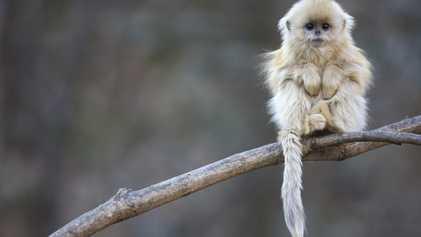 Imágenes de primates