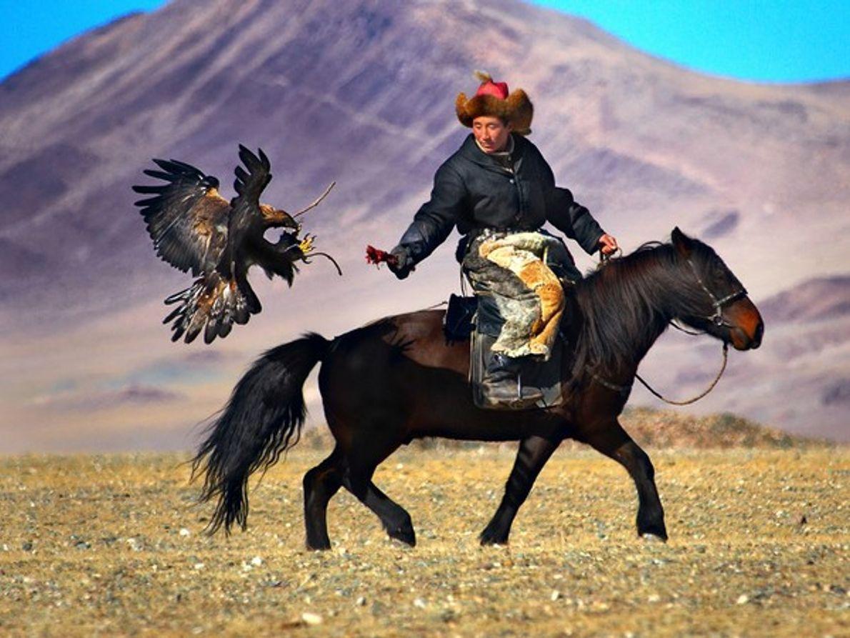 Águila dorada cetrera