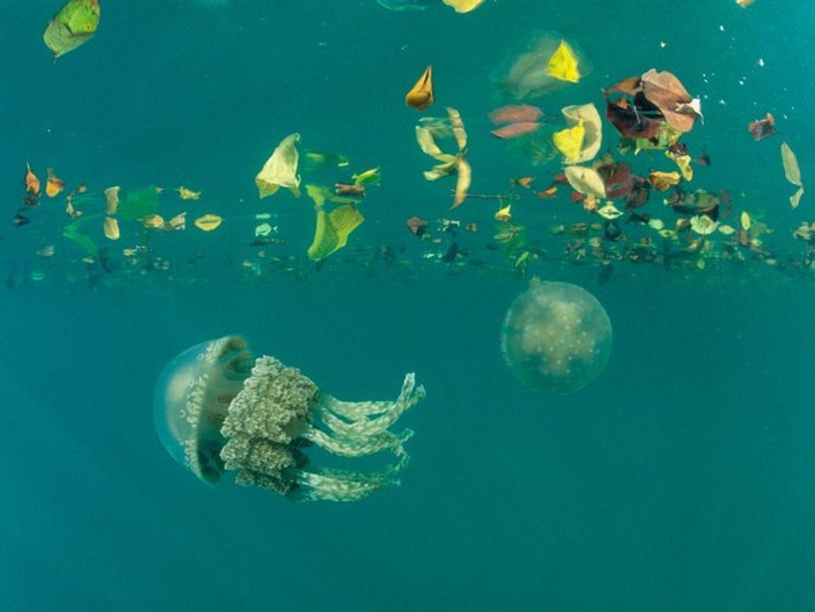 Medusas en la laguna