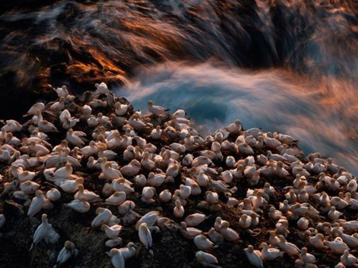 Península de Langanes, Islandia