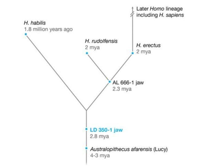 Árbol evolutivo