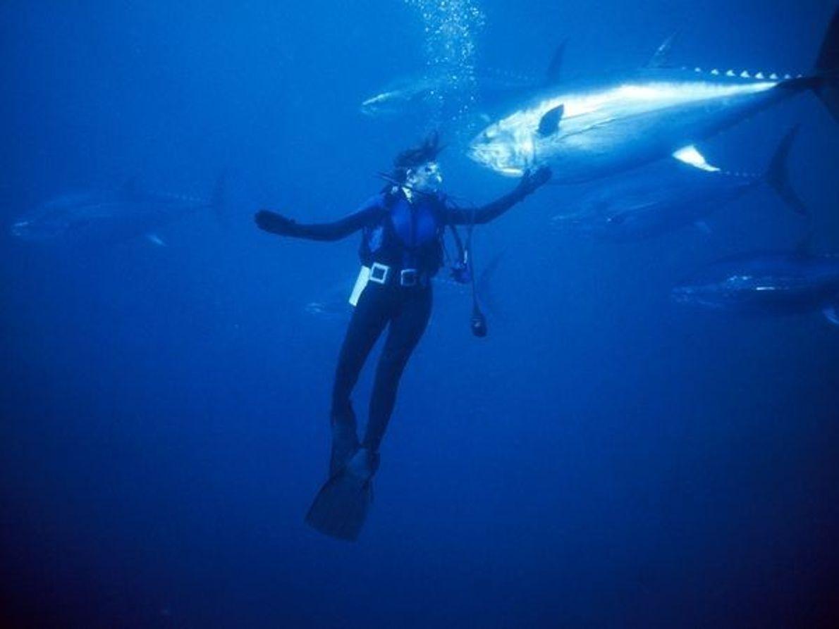 Buceador y atún gigante