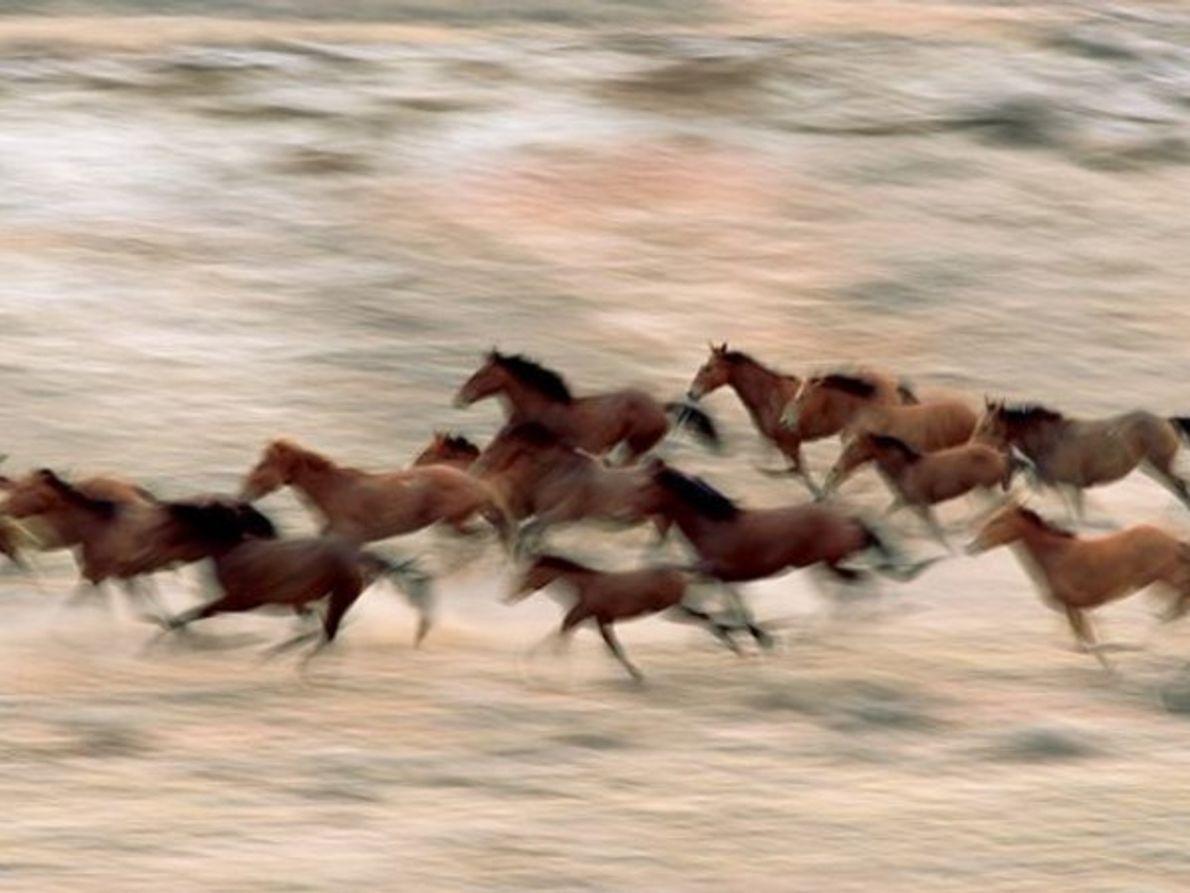 Caballos salvajes, Wyoming