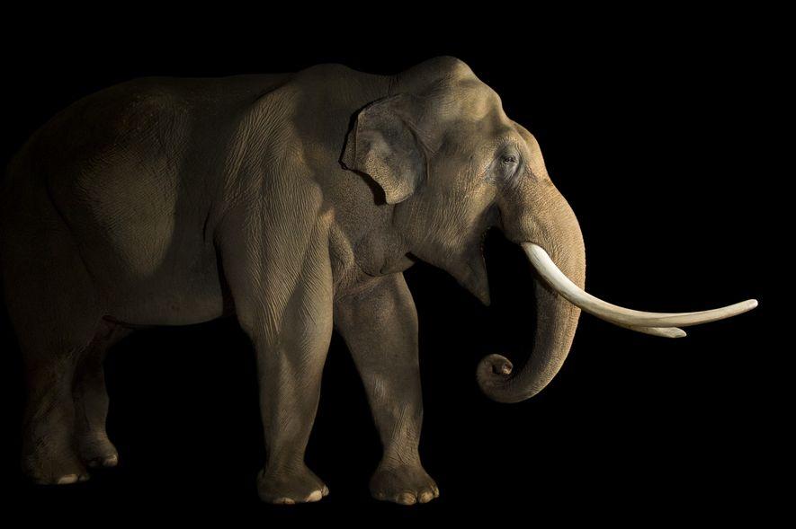 Explora la biodiversidad de los mamíferos con Photo Ark