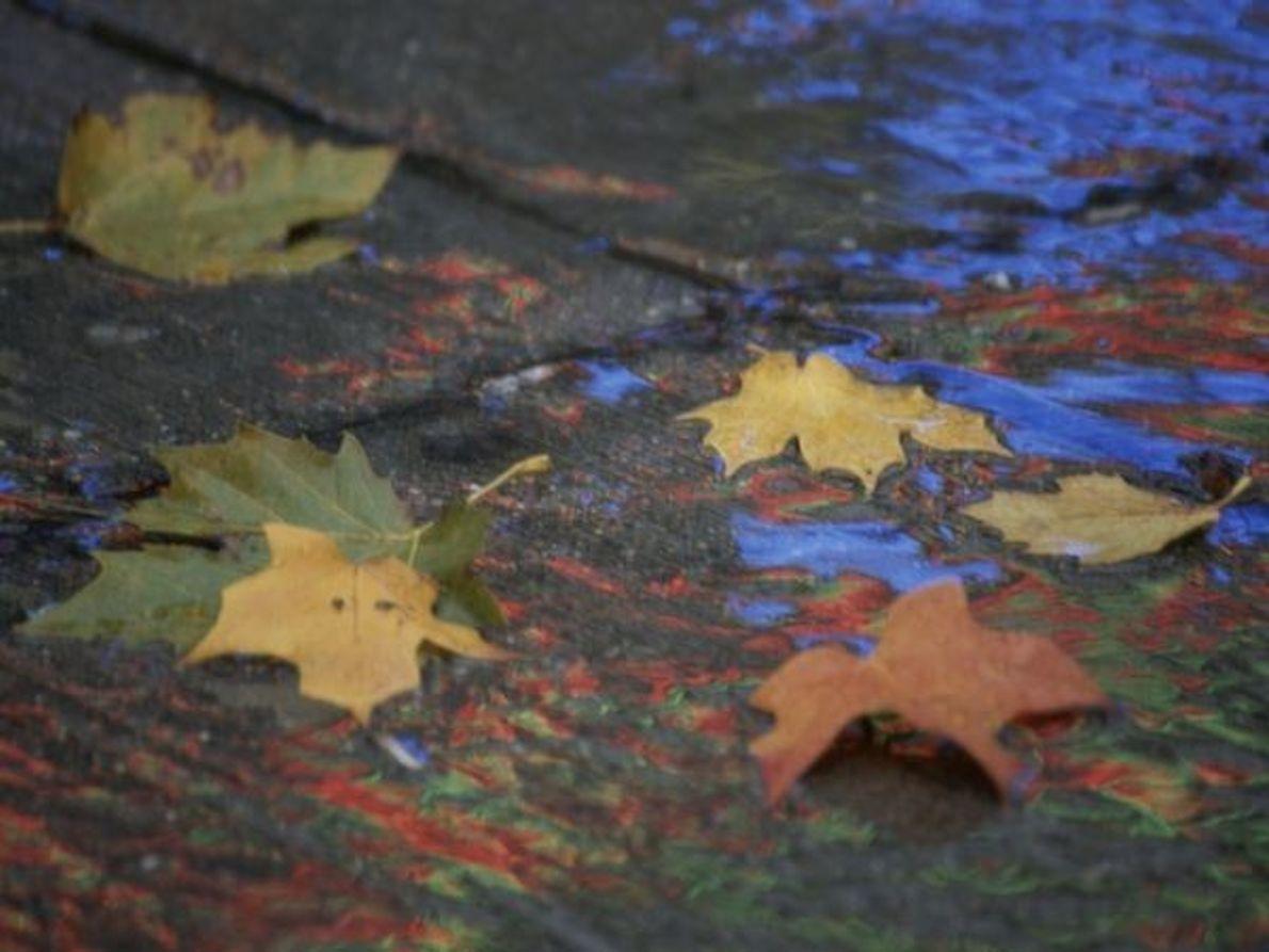Hojas mojadas de otoño, Washington, DC